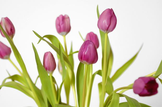 Lampada Fiore Tulipano : Mazzo tulipani artfrigo